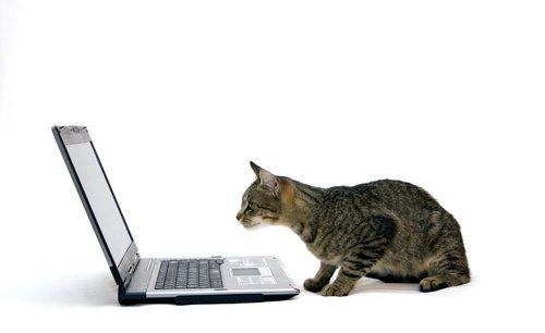 kittylaptop